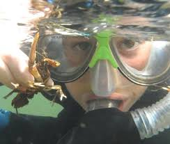 Tennessee snorkeling images Cherokee national forest snorkel trips 2016 trip reports nanfa jpg