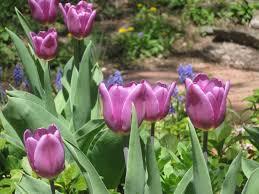 april garden chores