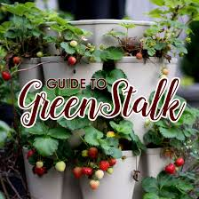 a detailed how to guide to growing in the greenstalk vertical
