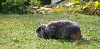 how can i make sure my outdoor rabbit is safe from predators