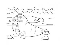 coloring pages animals free walrus coloring pages mammal