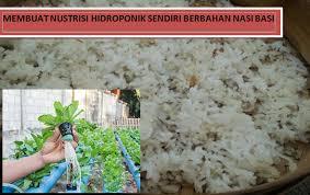 cara membuat cairan hidroponik cara membuat nutrisi hidroponik sendiri dari nasi basi