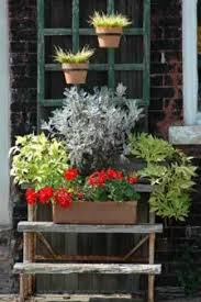 patio and balcony gardening thriftyfun