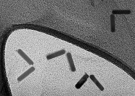 some very suspicious tem images in nano letters chembark