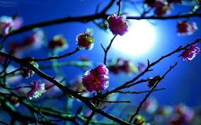 Flower Screen Backgrounds - flowers moonlight night spring moon blossoms light lotus flower