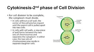 unit 2 lesson 1 the cell k12 notes ppt video online download