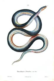 best 25 snake drawing ideas that you will like on pinterest