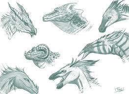 dragon head sketches by caerulai on deviantart