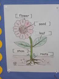 27 best botany for kids images on pinterest plants botany and