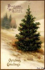 Pacific Northwest Christmas Tree Association - layered noble fir christmas trees natural christmas trees