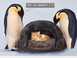 super warm winter pet cat sleeping bag soft fleece cat pet dog