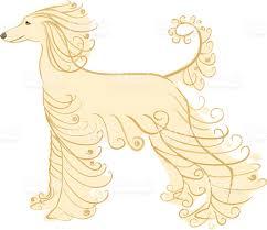 afghan hound dog images afghan dog clip art vector images u0026 illustrations istock