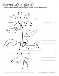 Label And Color The Parts Of A Plant Flower Coloring Page We Are Photosynthesis Coloring Page