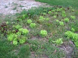 what is best fertilizer for vegetable garden part 36 fabulous