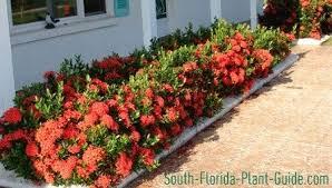 small shrubs