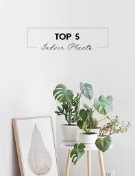 best house plants top 5 indoor plants botanical deer