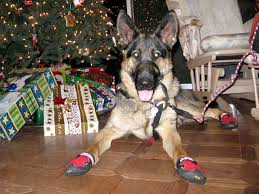 tripawds gear help three legged dogs ruffwear boots product