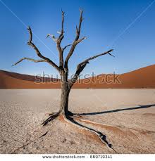 driedout dead tree that once stock photo 23222332