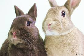 world of rabbit hop to the montreal spca to demystify the world of rabbits