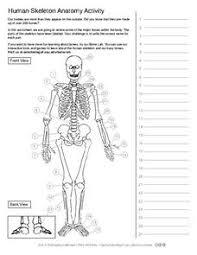 human skeleton unlabeled worksheet u2013 hd m com