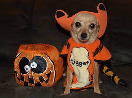 easy homemade dog treats for 4 legged trick or treaters on