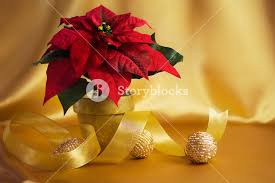 silk floral poinsettia ornaments gold ribbon and soft