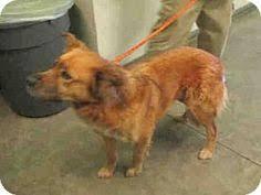 boxer dog adoption los angeles fillmore ca husky mix meet patches a dog for adoption http