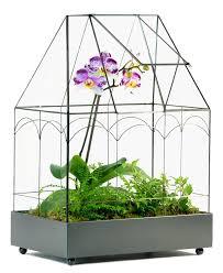amazon com h potter wardian case glass plant succulent terrarium