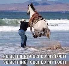 Foot Meme - horse memes the something touched my foot meme wattpad