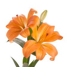 orange la hybrid lilies 60 stems lilies types of flowers
