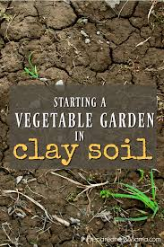 chicken manure vegetable garden starting a vegetable garden in clay soil preparednessmama