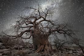 starlight illuminates s oldest trees in photos by beth moon