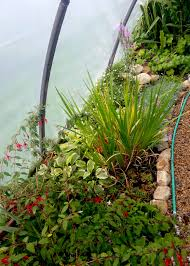what to grow in a vegetable garden polytunnels and organic growing over the winter monthsgreenside up