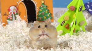 day 2 o christmas tree cute hamsters 12 days of christmas
