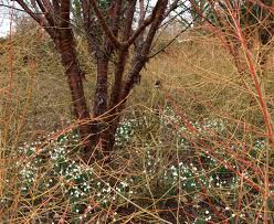 Anglesey Abbey Winter Garden - the kyoto garden u2013 a hidden london gem and winter inspiration for