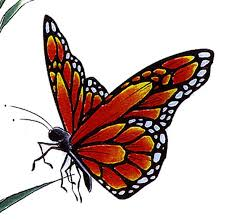 25 best flash butterfly images on