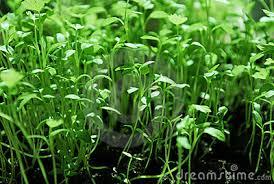 Green Plants Small Green Plants 11995487 Jpg