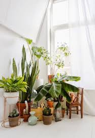 Home Plant Decor by Ideas For Indoor Plant Decor That Will Freshen Up Your Home
