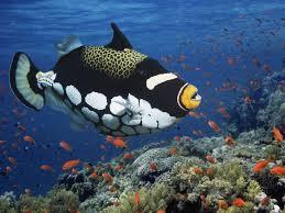 top 22 world u0027s most beautiful fish