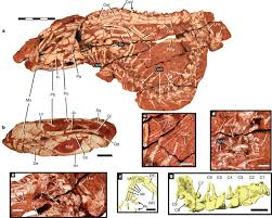 The evolution of mammal like crocodyliforms in the Cretaceous Period