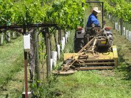butler equipment inc mowers and cultivators for vineyards