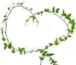 border frame made of green climbing plant shape heart close