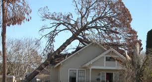 stump stump removals