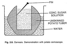 process of osmosis in plants with experiments