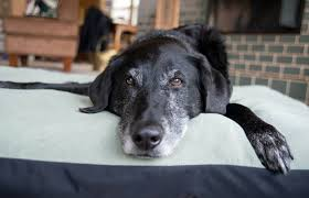 7 things your senior dog would like to tell you mnn mother
