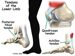 Foot Tendons Anatomy Tendonitis Central Orthopedic Group