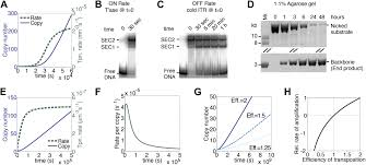 the autoregulation of a eukaryotic dna transposon elife