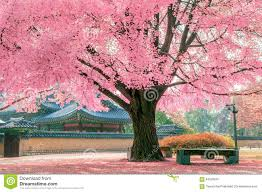pink tree in gyeongbokgung stock photo image 64599910