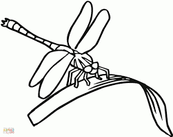 simple dragonfly drawing dragonfly coloring pages free coloring