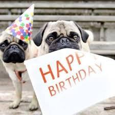 Birthday Pug Meme - pug memes funny collection of happy birthday pug memes